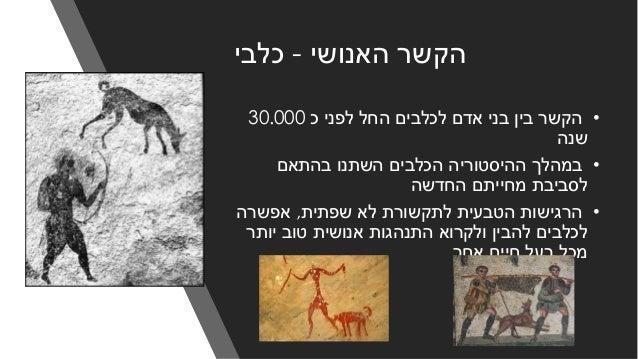 האנושי הקשר-כלבי •כ לפני החל לכלבים אדם בני בין הקשר30.000 שנה •בהתאם השתנו הכלבים ההיסטורי...