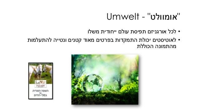 """""""אומוולט""""-Umwelt •משלו ייחודית עולם תפיסת אורגניזם לכל •להתעלמות ונטייה קטנים מאוד בפרטים התמקדות..."""