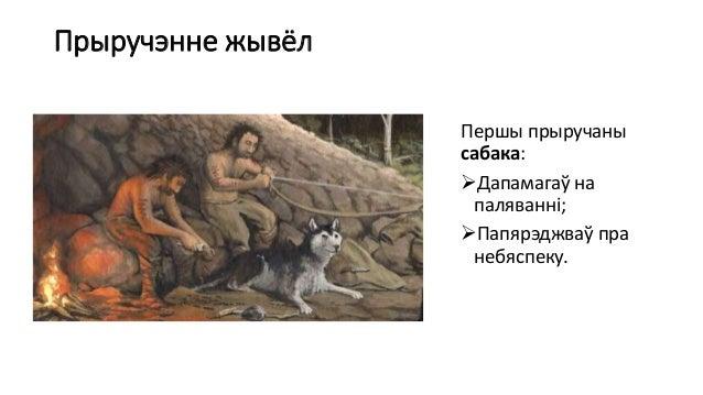 Прыручэнне жывёл Першы прыручаны сабака: Дапамагаў на паляванні; Папярэджваў пра небяспеку.