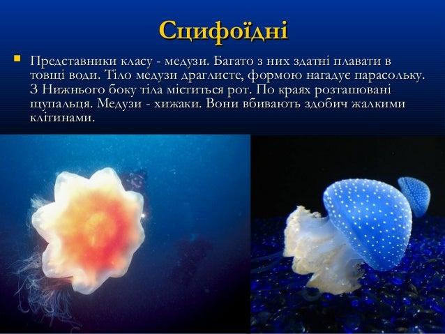 СцифоїдніСцифоїдні  Представники класу - медузи. Багато з них здатні плавати вПредставники класу - медузи. Багато з них з...