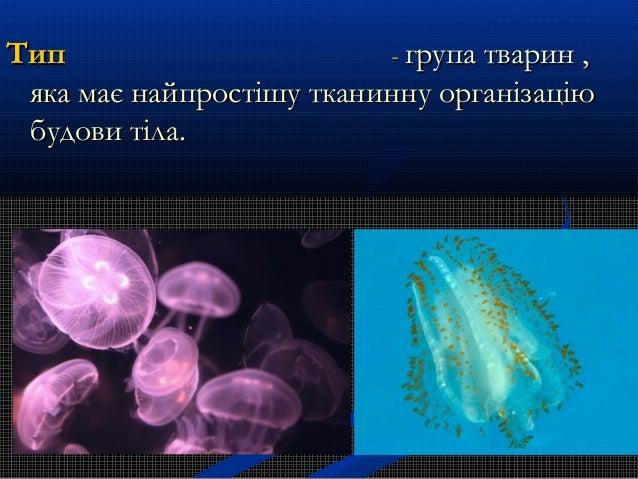 ТипТип -- групатварин,групатварин, яка має найпростішу тканинну організаціюяка має найпростішу тканинну організацію ...