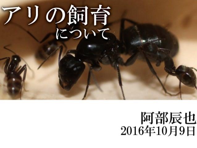 アリの飼育について