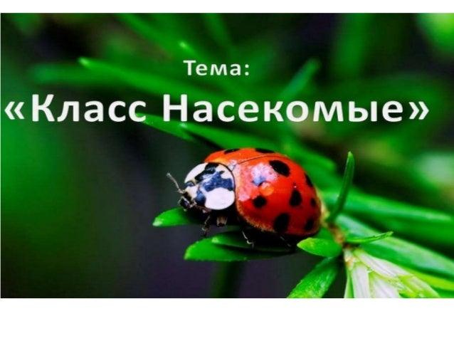 презентация биология насекомые
