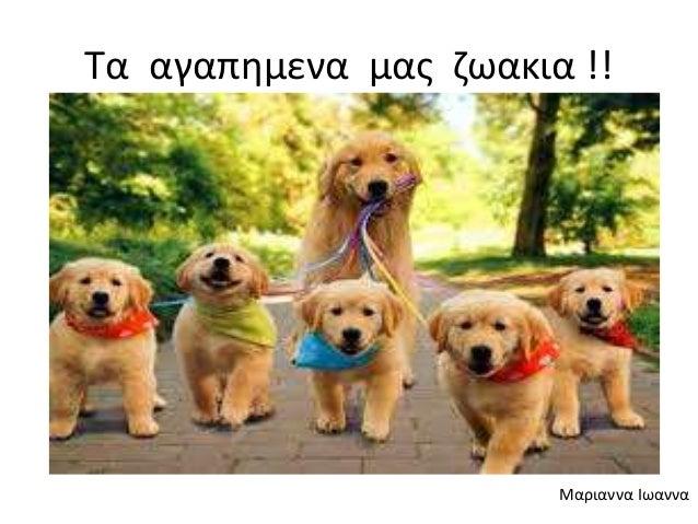 Τα αγαπημενα μας ζωακια !! Μαριαννα Ιωαννα