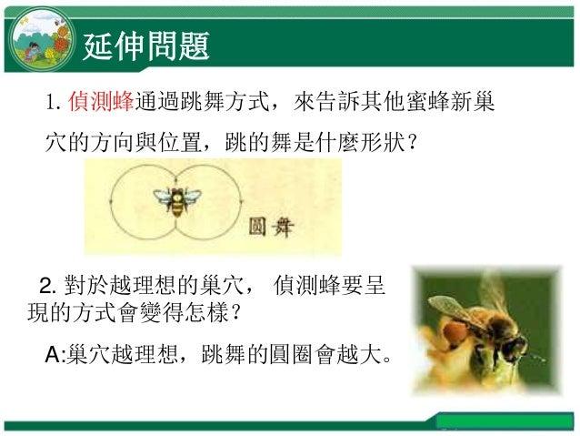延伸問題 1.偵測蜂通過跳舞方式,來告訴其他蜜蜂新巢 穴的方向與位置,跳的舞是什麼形狀? 2. 對於越理想的巢穴, 偵測蜂要呈 現的方式會變得怎樣? A:巢穴越理想,跳舞的圓圈會越大。