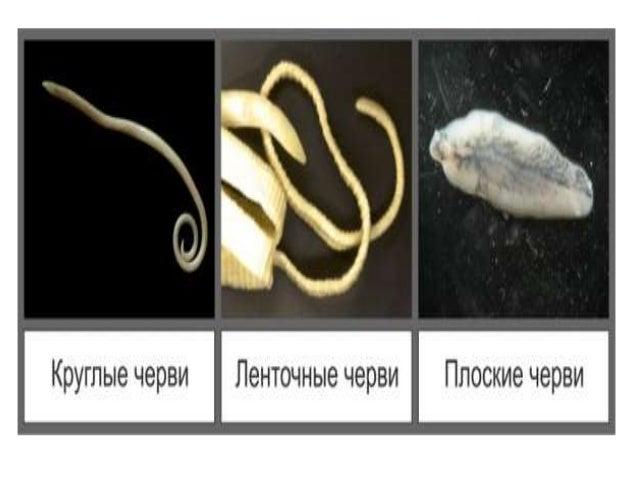 паразитичні черви