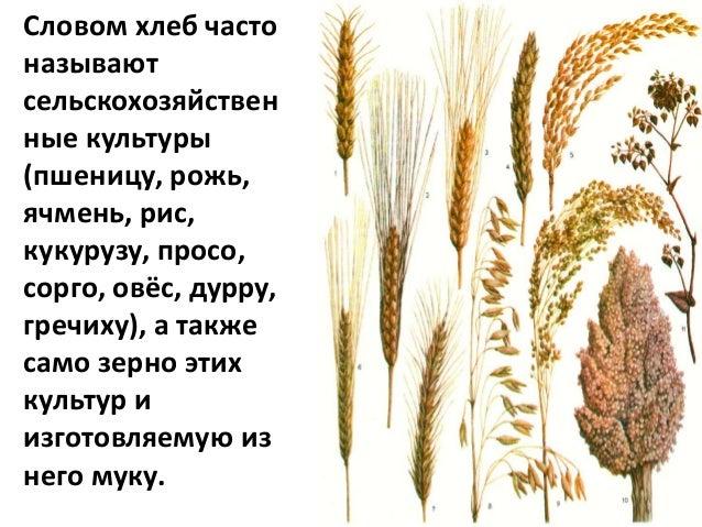 Слава хлебу на столе Slide 3