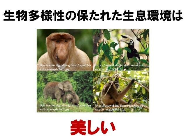 https://www.digitaliwago.com/report/zu kan/borneo/photo03.jpg https://www.digitaliwago.com/report/zu kan/borneo/photo07.jp...