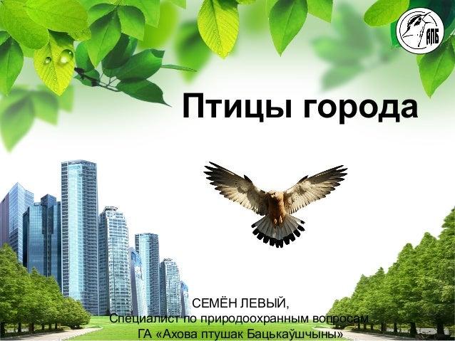 L/O/G/O Птицы города СЕМЁН ЛЕВЫЙ, Специалист по природоохранным вопросам ГА «Ахова птушак Бацькаўшчыны»