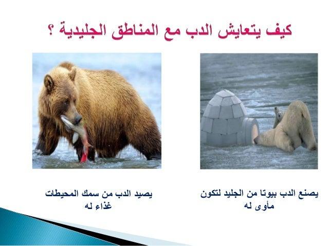 العلاقات في الانظمة البيئية