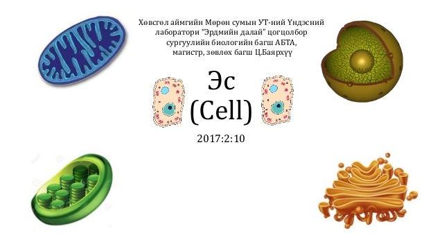 """Эс (Cell) 2017:2:10 Хөвсгөл аймгийн Мөрөн сумын УТ-ний Үндэсний лаборатори """"Эрдмийн далай"""" цогцолбор сургуулийн биологийн ..."""