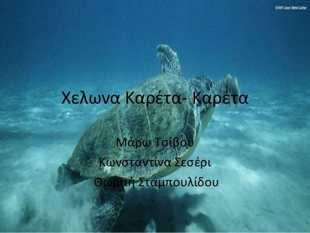 Χελωνα Καρέτα- Καρέτα Μάρω Tσίβου Κωνσταντίνα Σεσέρι Θωμαή Σταμπουλίδου