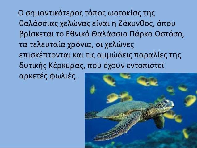 Ο σημαντικότερος τόπος ωοτοκίας της θαλάσσιας χελώνας είναι η Ζάκυνθος, όπου βρίσκεται το Εθνικό Θαλάσσιο Πάρκο.Ωστόσο, τα...