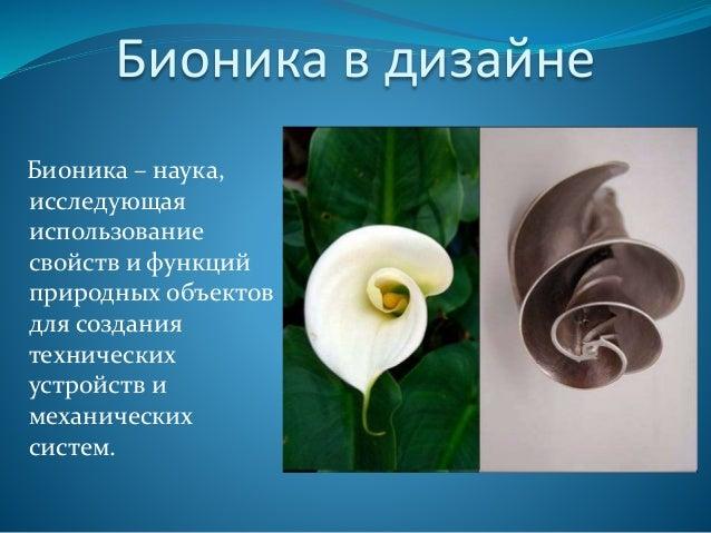 Картинки по запросу бионика