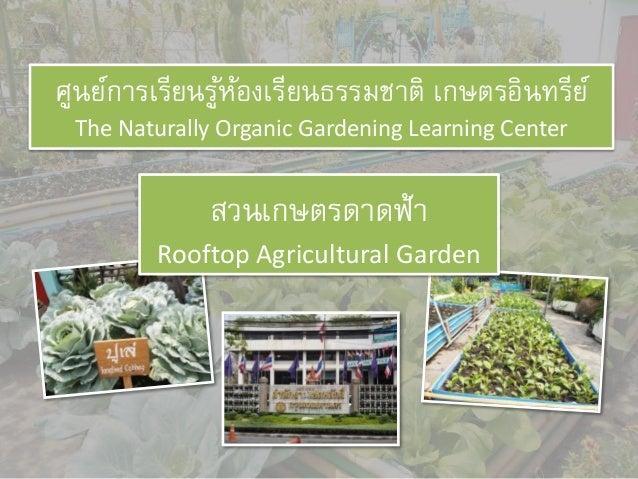 สวนเกษตรดาดฟ้า Rooftop Agricultural Garden ศูนย์การเรียนรู้ห้องเรียนธรรมชาติ เกษตรอินทรีย์ The Naturally Organic Gardening...