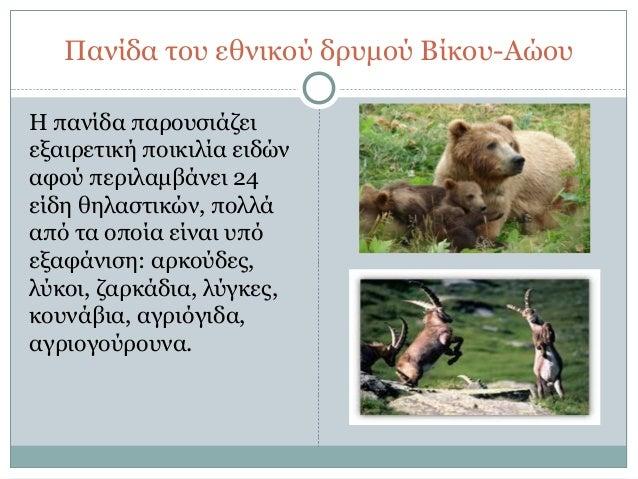 Αρκούδες που χρονολογούνται