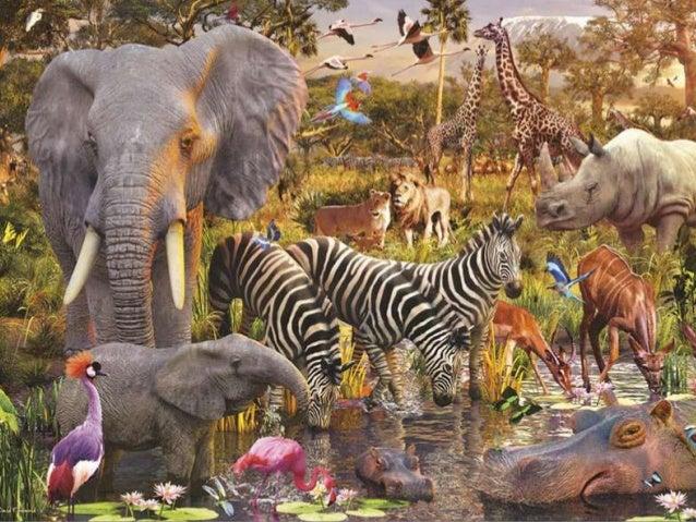 Бытие 1:20-25 И сказал Бог: да произведет вода пресмыкающихся, душу живую; и птицы да полетят над землею, по тверди небесн...