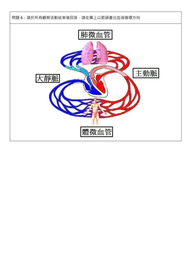 問題 6:請於所有觀察活動結束後回答,請在圖上以箭頭畫出血液循環方向