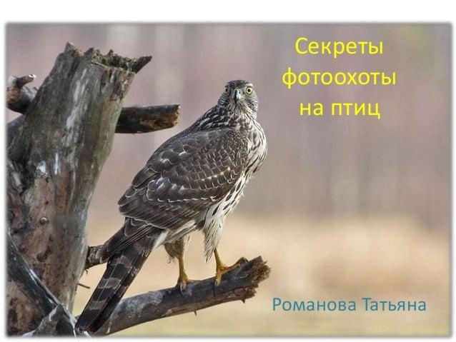 Секреты фотоохоты на птиц Романова Татьяна