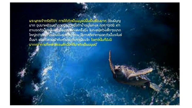 พระพุทธเจ้าตรัสไว้ว่า การได้เกิดเป็นมนุษย์นั้นเป็นเรื่องยาก ต้องมีบุญ มาก อุปมาเหมือนเต่าตาบอดตัวหนึ่งด้าน้้าอยู่ในทะเล ทุ...