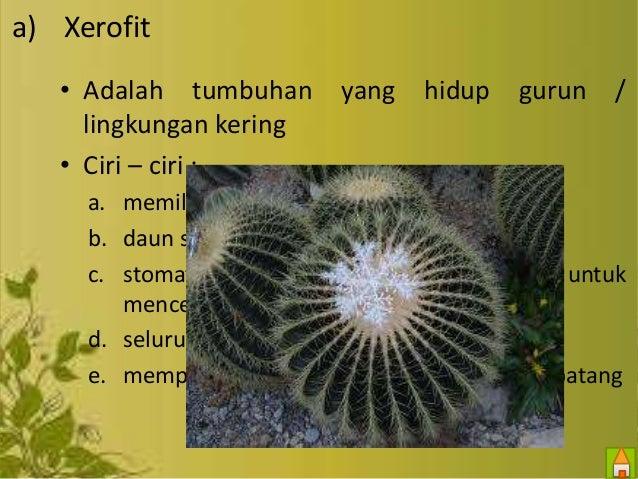 Terbaik Dari Jenis Jenis Tumbuhan Xerofit Bunga Hias