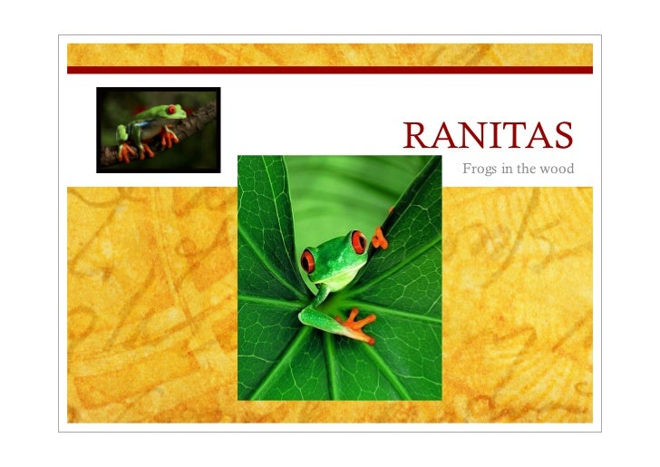 RANITAS   Frogs in the wood