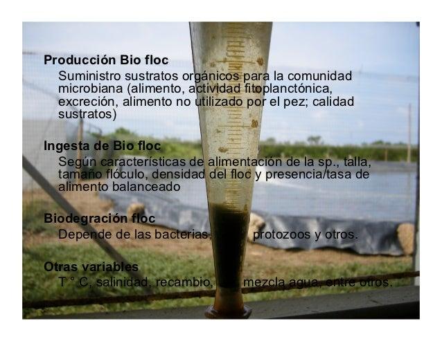 Rapco 2009 ceniacua tilapia roja agua marina biofloc for Tabla de alimentacion para tilapia roja