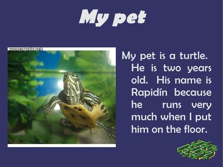 My pet <ul><li>My pet is a turtle.  He is two years old.  His name is Rapidín because he  runs very much when I put him on...