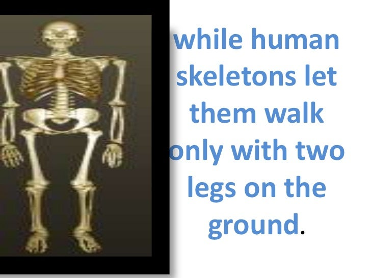 comparison of human and chimpanzee skeletons, Skeleton