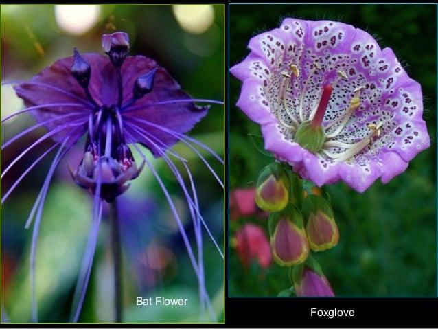 Flores raras - Fotos de flores bonitas ...
