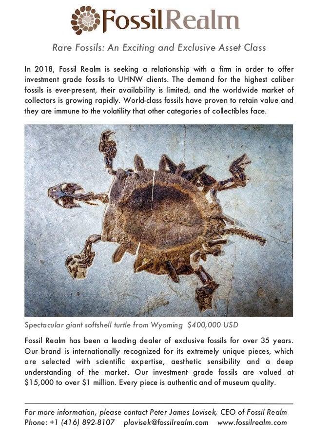 Rare Fossils ~ Investment Grade