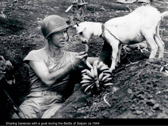 Sharing bananas with a goat during the Battle of Saipan ca 1944