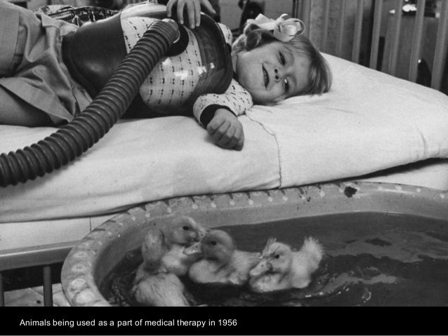 Animals being used as a part of medical therapy in 1956