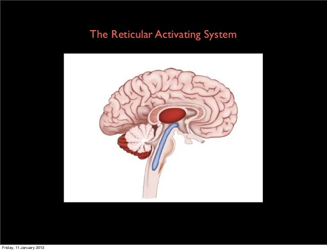 The Reticular Activating SystemFriday, 11 January 2013