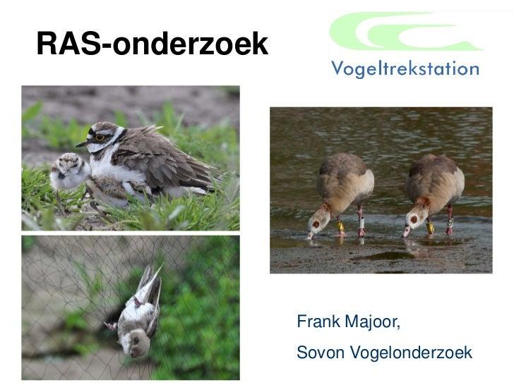 RAS-onderzoek                Frank Majoor,                Sovon Vogelonderzoek