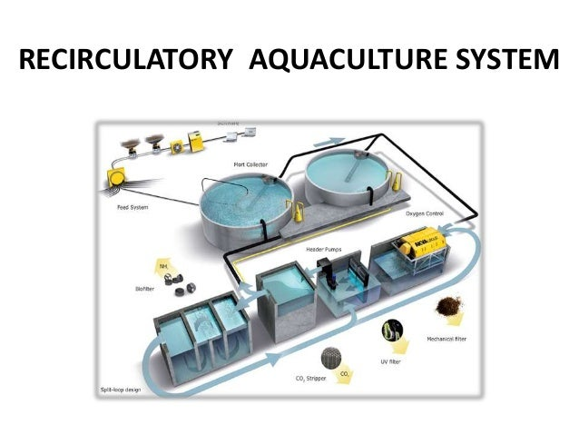 Recirculatory Aquaculture System