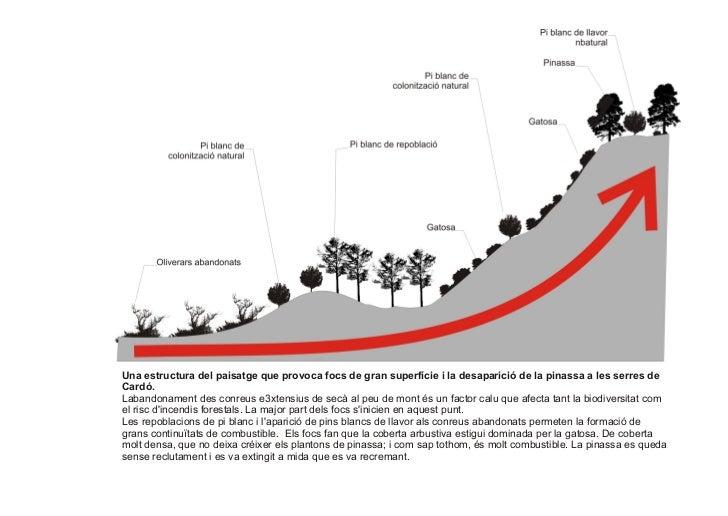 Una estructura del paisatge que provoca focs de gran superfície i la desaparició de la pinassa a les serres deCardó.Laband...