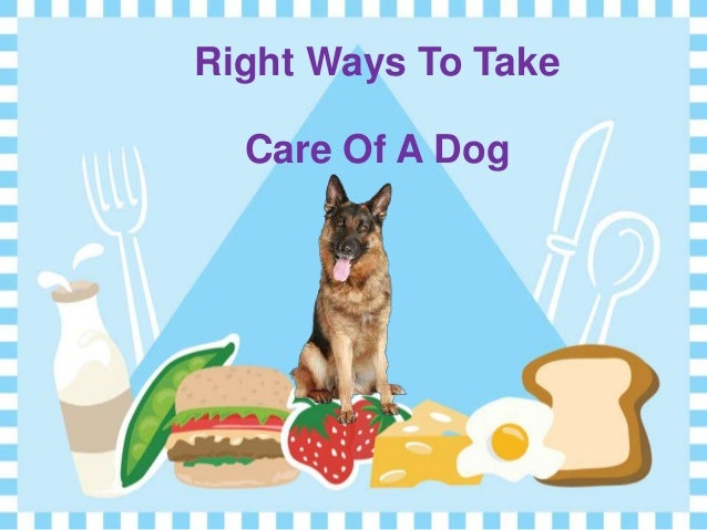 how to take care of dogs Your dog just had surgery maybe he/she was neutered or spayed and sent home with stitches or staples you may be wondering how to care for the stitches or how long they take to heal.