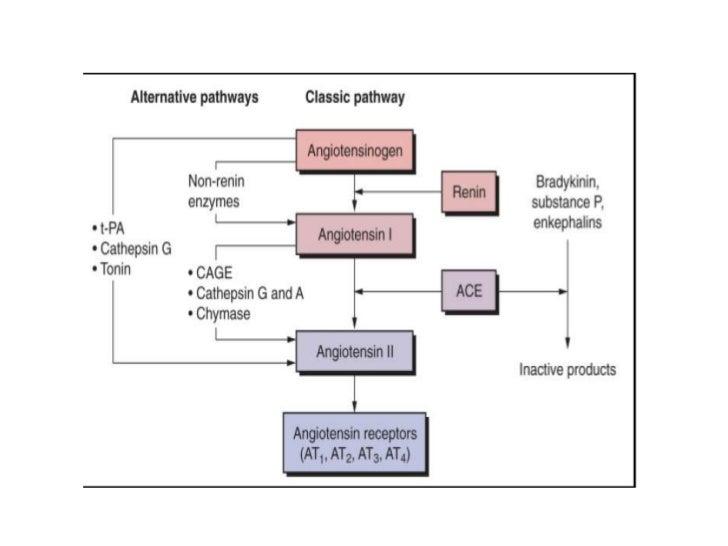 Concept Map Renin Angiotensin Aldosterone Mechanism.Renin Angiotensin Aldosterone Updates