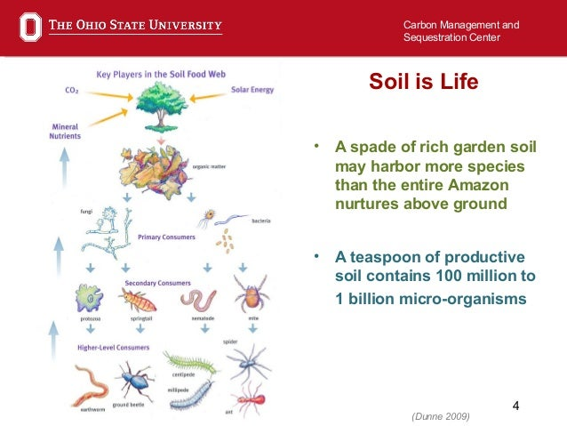Six feet under how soil microbial life works to bury for 0 4 soil carbon