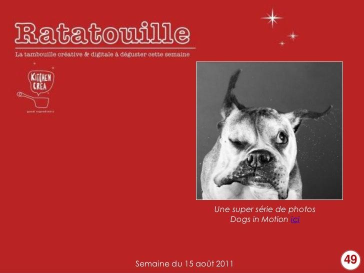 Une super série de photos                     Dogs in Motion iciSemaine du 15 août 2011                       49