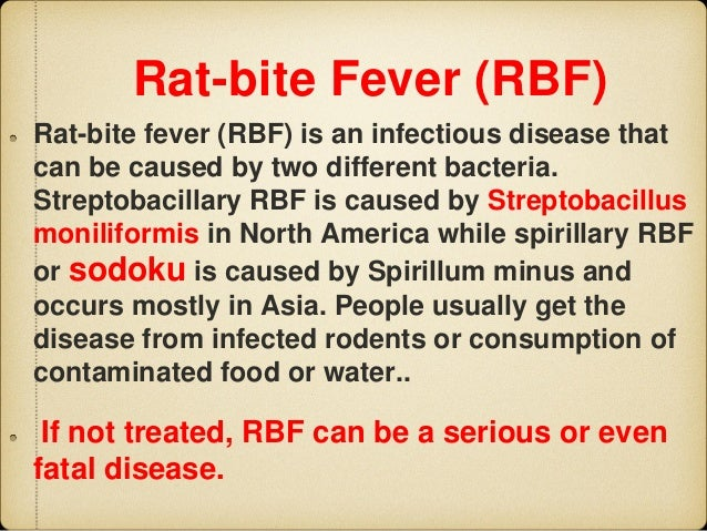 Can People & Pet Rats Catch Rat Bite Fever from ...