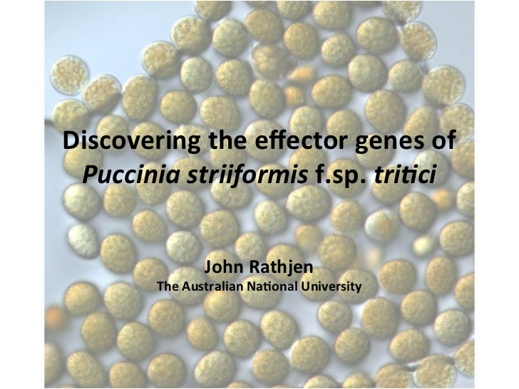 Discovering	  the	  effector	  genes	  of	   Puccinia	  striiformis	  f.sp.	  tri.ci	                       John	  Rathjen	...