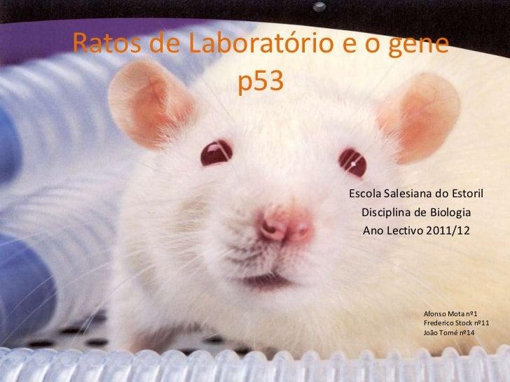 Ratos de Laboratório e o gene            p53                     Escola Salesiana do Estoril                       Discipl...