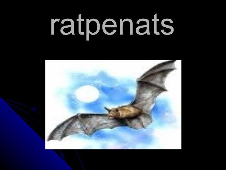 ratpenats