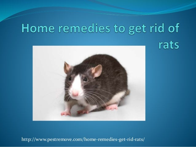 natural remedies for mice and rats