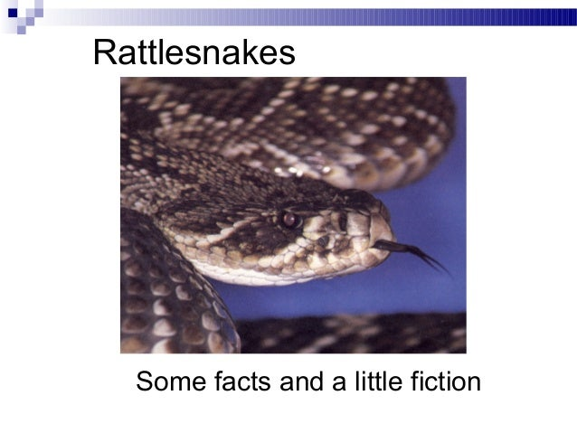 RattlesnakesSome facts and a little fiction