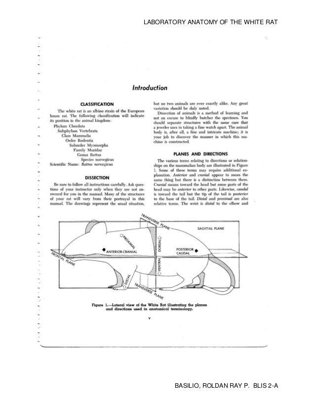 Laboratory Anatomy Of The White Rat Pdf