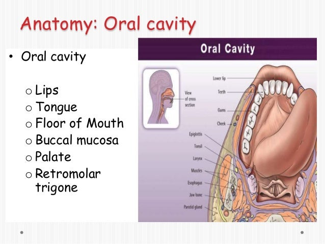 Common oral lesions by ravindra daggupati for Floor of mouth anatomy