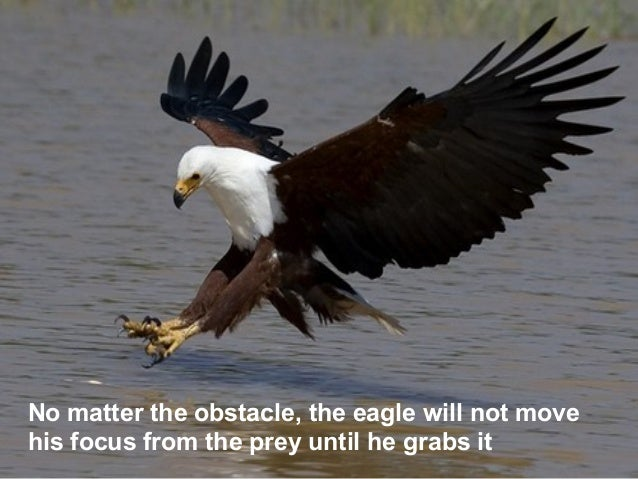 Motivational Lessons From Eagle